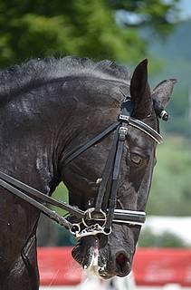 cheval encapuchonné