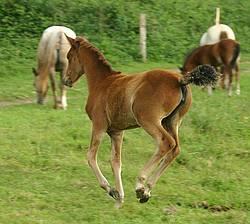 Le bien tre du cheval haras nationaux for Blessure levre interieur