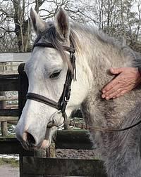 besoin éthologique du cheval