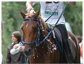 emphysème cheval symptômes