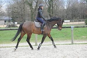 cheval monté en filet simple, sans éperons