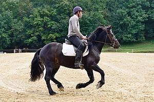 contrats au pair chevaux jurisprudence