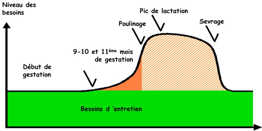 métrite pendant gestation