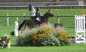 e63be141261e05 La vision du cheval   - Haras-nationaux