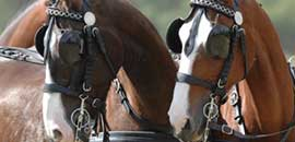 chevaux attelés
